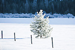 Frost covered tree in a field in winter