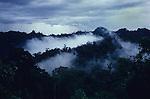 Primary Rainforest Canopy Sarawak