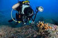Mission - Monk SealDesertas Islands &ndash; Deserta Grande - Madeira, Portugal. August 2009.<br /> Tree Coral - Dendrophyllia ramea