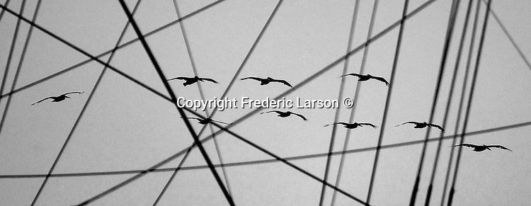 Pelicans fly by the Balclutha sailing ship at Fishermen Wharf, San Francisco, California.