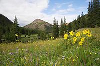 Flowering Mountain Meadow