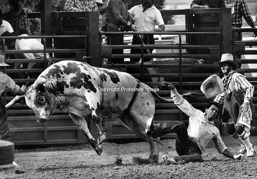 RODEO, Livermore, California, Aug 12, 1984<br />