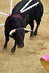 25 March 2005: The Corrida de Toros, or bullfights, took place at the Plaza Silverio Perez in Texcoco, Mexico on Friday, March 25th..