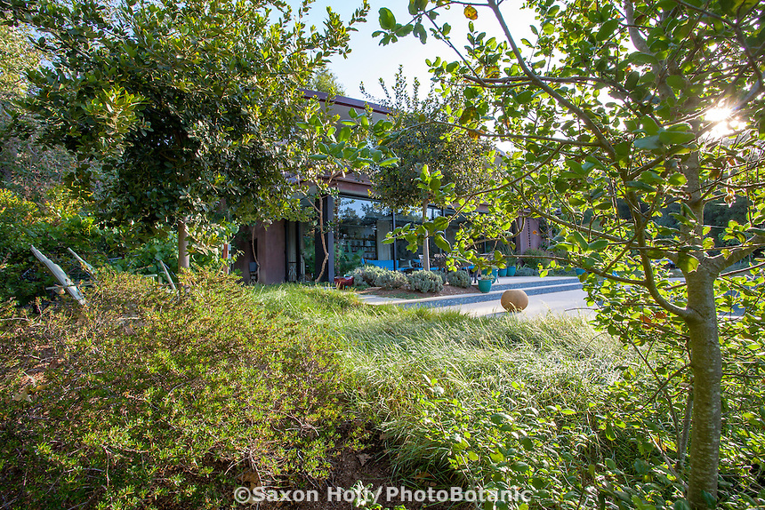 Native trees and shrubs, Coyote House, SITES® residential home with sustainable garden Santa Barbara California, Susan Van Atta design