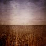The horizon looking through long grass at the beach