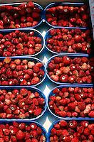 FOOD GROUPS: FRUIT<br /> Wild Strawberries
