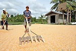 """A man dries corn in the sun in Nalapaan, one of seven villages near Pikit which has declared itself a """"space for peace."""" An initiative of the Immaculate Conception Parish in Pikit, the spaces for peace are villages where residents have told both the Moro Islamic Liberation Front and the Philippine military to desist from activity within the community. Residents also studied peacebuilding and conflict resolution,  and have made special efforts to increase interfaith dialogue and harmony."""