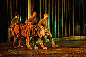 Regent's Park Open Air Theatre presents RUNNING WILD, by Michael Morpurgo, in an adaptation by Samuel Adamson. the production is directed by Timothy Sheader and Dale Rooks, design is by Paul Wills and lighting design by Paul Anderson. Picture shows: The Tiger