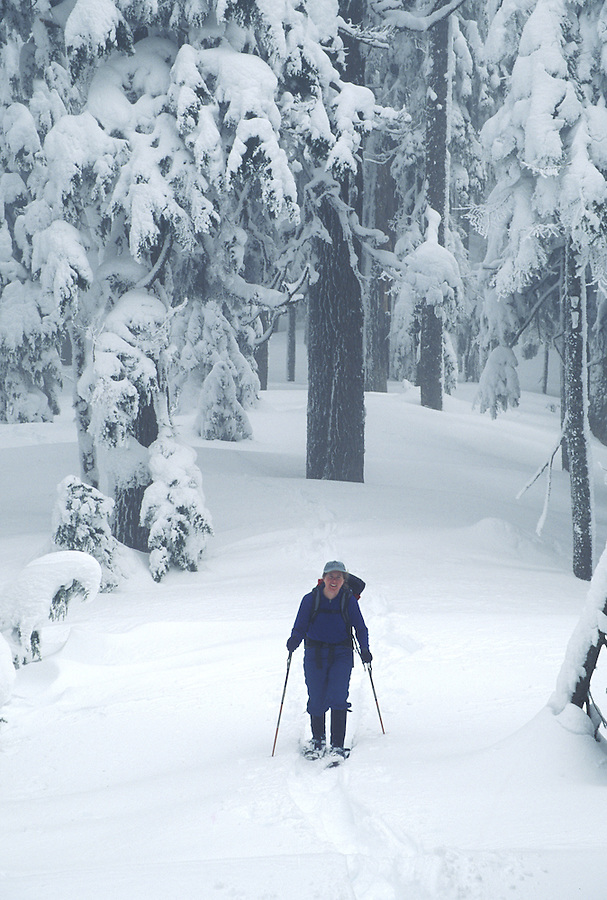 Woman snowshoeing in forest, Washington Cascade Mountains