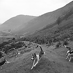 The Blencathra Foxhounds.  The Blencathra foxhounds are considered by many to be one of the fastest packs in the country. They hunt a mixed pack of dogs and bitches, .Hunting with Hounds / Mansion Editions (isbn 0-9542233-1-4) copyright Homer Sykes. +44 (0) 20-8542-7083. &lt; www.mansioneditions.com &gt;