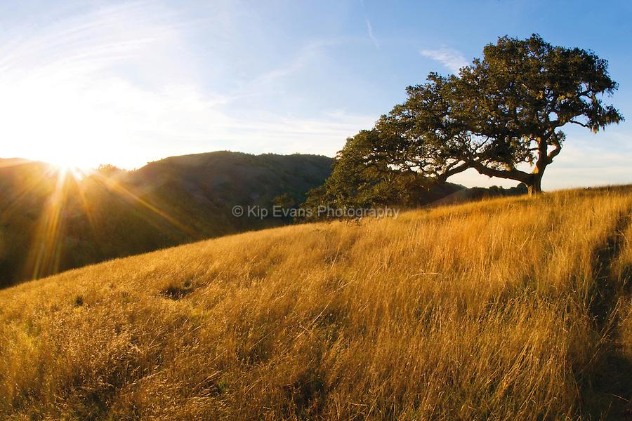 Coast live oak and grassland - Santa Lucia Preserve, CA