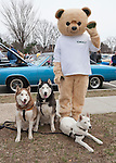 The Husky Brothers, Frankie, Cain and Tsar, are having their picture taken with Kingsley, the Kings supermarket mascot, at the 58th Annual Easter Sunday Vintage Car Parade and Show sponsored by the Garden City Chamber of Commerce. Hundreds of authentic old motorcars, 1898-1988, including antiques, classic, and special interest participated in the parade.