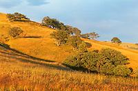 Bald Hills prairie, Redwood National Park, California