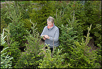 BNPS.co.uk (01202) 558833<br /> Picture: LauraJones/BNPS<br /> <br /> Jo Hunt from Charminster, Dorset pruning the Christmas trees ready for renting out.<br /> <br /> En-tree-preneur Peter Inch has found an innovative way to stop Christmas trees being discarded after the festive season - by renting and replanting them.<br /> <br /> The businessman has grown around 3,000 pine trees on his farm that he charges people to use in their homes during the holiday period.<br /> <br /> Peter delivers the trees to customers' doors at the end of November and then collects them in the first week of January.<br /> <br /> Once he has picked up the trees they are placed back in the ground in tubs and linked up to a watering system that revives them after being inside for so long.