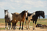 A group of wild horses stand in the dust and green fields in Northwest Wyoming.