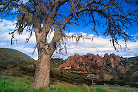 730850112 a large oak tree quercus spp frames the rocky outrcop of the pinnacles rock formations pinnacles national park california