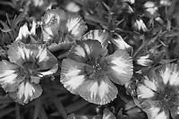 Flowers at Memphis Botanical Garden.