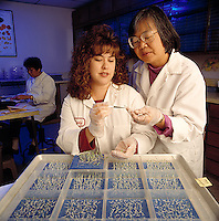 Agriculture - A technician and lab manager inspect a seedling at a seed technology laboratory / Salinas, California, USA.  MR