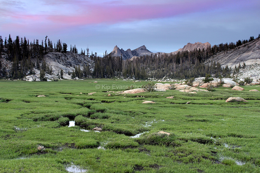 Long Meadow - High Sierra Meadow, Yosemite High Country.
