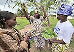 Honorine Mujing Mwad, director of the Mary Morris Orphanage, run by the United Methodist Church in Kamina, Democratic Republic of the Congo, harvests moringa leaves in the orphange yard. The orphanage adds the moringa leaves to the children's food as a nutritional supplement.