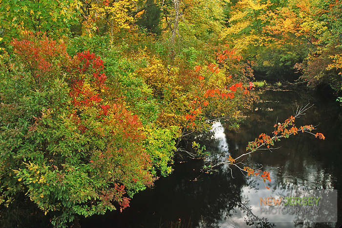 Little Hauken Creek, woodland forest, Chatsworth, New Jersey