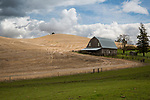 Washington, Eastern, Steptoe, Palouse Region. An old gray barn under partly cloudy skies in spring.