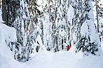 A person in a red coat taking a selfie in deep snow, surrounded by giant trees.