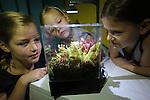 Foto: VidiPhoto <br />  <br /> BLEISWIJK &ndash; Het is de ultieme oplossing voor ons nationale muggenprobleem: vleesetende planten in een aquarium. De &lsquo;groene muggenvangers&rsquo; van de Chris van der Velde (20) uit Bleiswijk zijn amper een week op de markt, maar vliegen inmiddels letterlijk de deur uit. Eerder dit jaar ontwikkelde vader Simon, tevens waterplantenkweker, een educatief plantenaquarium (Amazing World) voor in kinderslaapkamers met vleesetende planten. Het blijkt echter een wondermiddel tegen muggen. De zoetgeurende planten en de blauw-witte LED-lampjes lokken de muggen door een opening in de transparante deksel naar binnen. Ontsnappen is niet meer mogelijk en de planten happen toe.  Insecten als muggen en vliegen vormen ook nog eens de natuurlijke plantenvoeding, dus meer onderhoud dan een maandelijkse scheut water heeft het plantenaquarium niet nodig. Door het warme en vochtige weer worden er veel muggen verwacht. Foto: Judith (9), Elise (4) en Susanne (7) uit Berkel en Rodenrijs zijn dolblij met de muggenvanger.