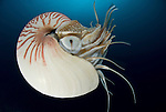 Nautilus