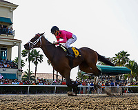 HALLANDALE BEACH, FL - APRIL 01:  #6 Salty with Joel Rosario up wins the Florida Oaks (G2) Florida Derby Day at Gulfstream Park, Hallandale Beach, FL. (Photo by Arron Haggart/Eclipse Sportswire/Getty Images)