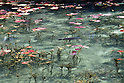 Monet pond makes an impression in Japan