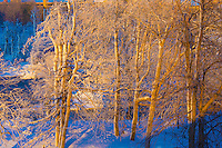 Frosted trees near Niagara Falls in winter and rainbow, Niagara Falls State Park, New York, American Falls and Bridalveil Falls