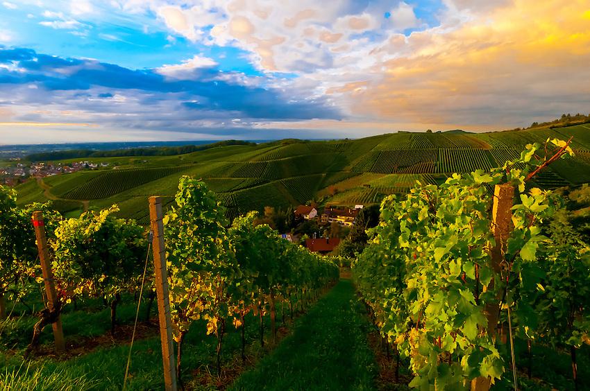 vineyards at sunset offenburg baden w rttemberg germany blaine harrington iii. Black Bedroom Furniture Sets. Home Design Ideas