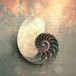 Nautilus seashell photographed on natural organic surface with mixed medium treatment and ancient sanskrit.