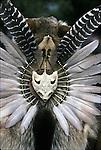 Ethnic Pride, heritage, celebration, Native American regalia pow wow