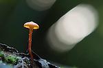 Rainforest mushroom.