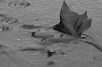 An autumn leaf being washed away by a late summer rain