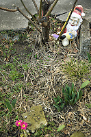 Italy. Lombardy region. Campione d'Italia. Two garden gnomes, a tree and purple flowers. A gnome is a mythical creature characterized by its extremely small size and subterranean free lifestyle. The garden gnomes are representating a dog with a golden crown and Santa Claus (Father Christmas) with blue eyes. Garden gnomes are a popular accessory in many gardens. Campione d'Italia is occupying an enclave within the Swiss canton of Ticino. 1.03.2008 © 2008 Didier Ruef ..
