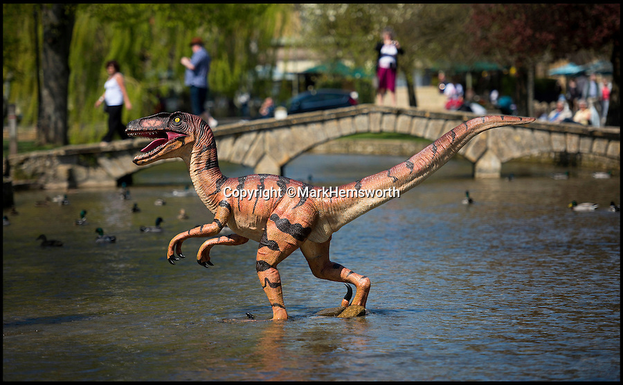 BNPS.co.uk (01202 558833)<br /> Pic: MarkHemsworth/BNPS<br /> <br /> A dinosaur crossing Bourton-on-the-Water's river.<br /> <br /> Visitors to one of Britain's oldest villages are used to seeing historic sights but many couldn't believe their eyes when a herd of life-sized dinosaurs descended on the picturesque settlement.<br /> <br /> The group of model dinosaurs made a startling sight as they made their way through Bourton-on-the-Water in Gloucestershire while on their way to the nearby Birdland attraction where they will form part of a new display.<br /> <br /> Some people looked on curiously as a velociraptor crossed the village's historic stone bridge while a cearadactylus in the River Windrush also caused some bemusement.