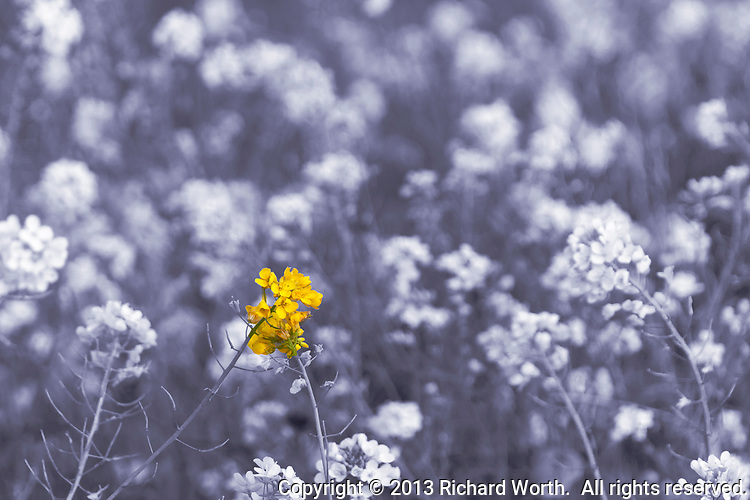 Black And White Photography With Yellow Color Splash A black and white image of