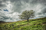 Scenic countryside view with rolling hills with single tree under cloudly sky