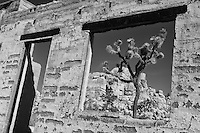 Joshua Tree Old Brick Structure Window View - Black & White