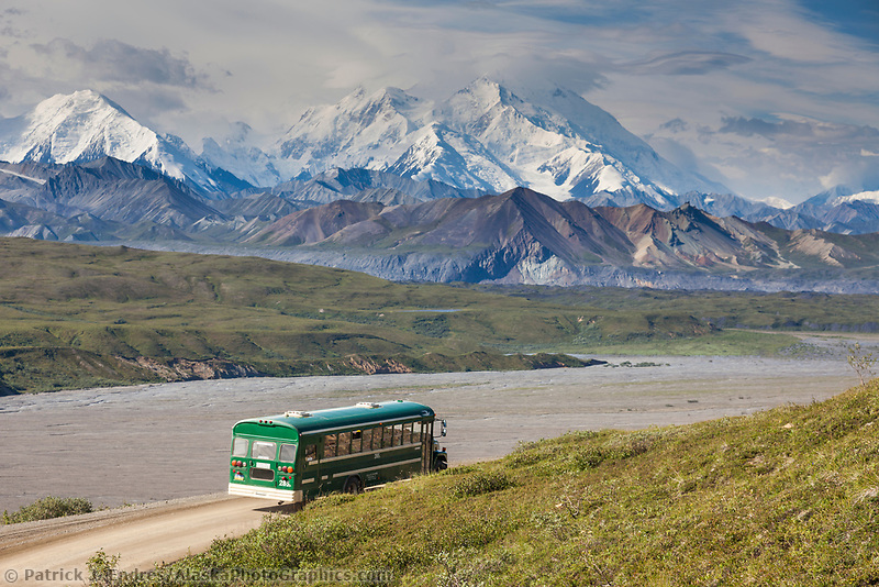 Tour bus of park visitors travel the Denali Park road along the Eielson Bluffs which offers great views of Denali,  when the skies are clear, Denali National Park, interior, Alaska.