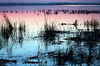 Zhalong Wetlands - China