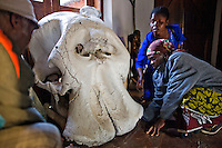 Women examine an elephant skull at the tourist camp in Kasanka National Park after going out on safari. 35 year old Roycee Chisenga places her hand where the tusks would sit and remarks how her head could fit in the gap. Local schools and women's groups are regularly brought into Kasanka, which is unique in the country and unusual in Africa as it is privately managed and owned by a trust. People are able to see animals flourishing in land which was once free reign for poachers. Combined with anti-poaching scouts, the education programme is on the frontline of conservation methods in the park, showing local people wild animals in their natural habitat.