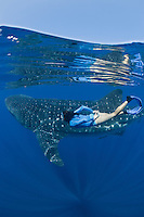 RX2187-D. Whale Shark (Rhincodon typus) swimming just under the surface while woman (model released) swims alongside the 25 foot gentle giant. Gulf of Mexico, Mexico, Caribbean Sea.<br /> Photo Copyright &copy; Brandon Cole. All rights reserved worldwide.  www.brandoncole.com
