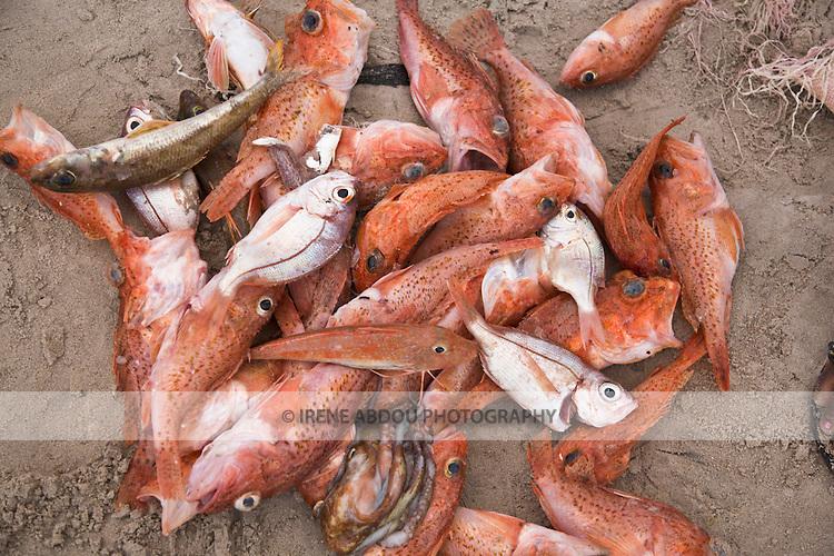 Piles of fish dot the beach at this beachside fish market in Dakar, Senegal.