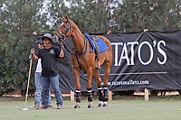 WELLINGTON, FL - APRIL 15:  Polo pony watches the game as she waits her turn to play. Scenes from the $100,000 World Cup Final, at the Grand Champions Polo Club, on April 15, 2017 in Wellington, Florida. (Photo by Liz Lamont/Eclipse Sportswire/Getty Images)