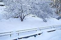 Snowy Central Park Benches