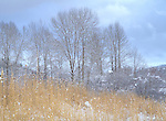 Idaho, Silver Valley, Cataldo. leafless winter trees against a cloudy sky.